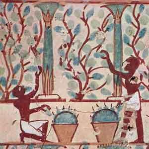 Darstellung Weinbau in Ägypten