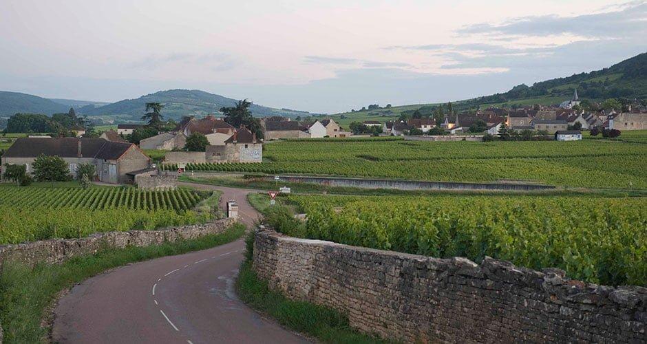 Typische Landschaft mit Reben im Burgund